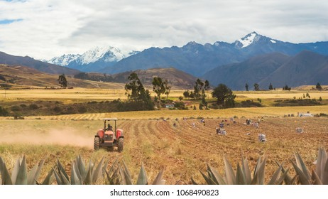Peruvian local country man working the land on a tractor in a field in Cusco, Perú. Surrounded by high mountains, farmers are harvesting and gathering season potatoes