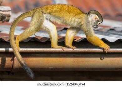 gutter monkeys coupon