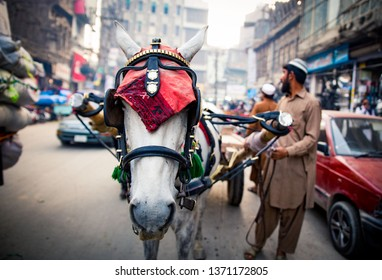 PESHAWAR, PAKISTAN - Sept 27 ,2018:  horse wider is holding horse in midle of road  27 Sept, 2018 qissa khwani Peshawar