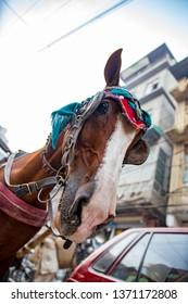 PESHAWAR, PAKISTAN - Sept 27 ,2018:  urban horse in local decoration 27 Sept, 2018 qissa khwani Peshawar