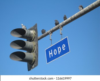 Pessimistic Hope. Pigeons dropping onto a sign for a street named Hope in Los Angeles, California.