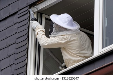 Pest controller removing a hornet nest