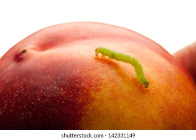 Pest worm (codling moth caterpillar) climbing on nectarine