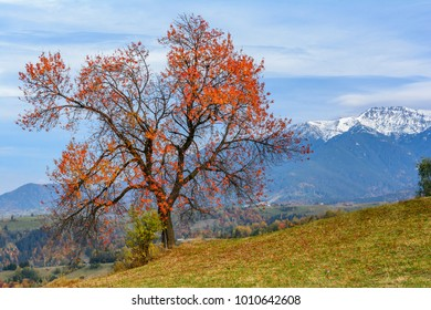 Pestera village,Romania:Autumn landscape with the Bucegi mountains in autumn collors.