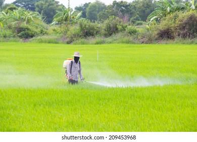 The pesticides , Farmer spraying pesticide