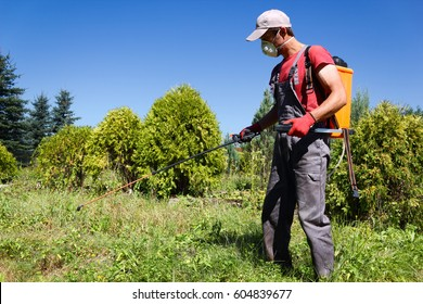 Pesticides Spraying. Farmer kills weed spraying pesticides in field by manual backpack sprayer. Europe, Poland.