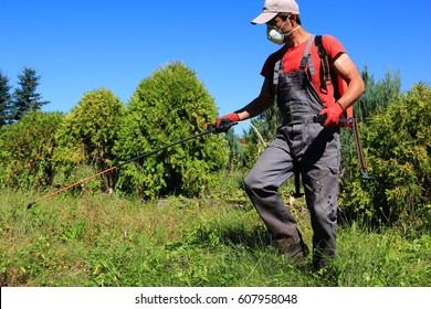 Pestizid-Spray. Bauern tötet Unkraut durch das Spritzen von Pestiziden im Feld durch manuelles Rucksack-Spritzen. Europa, Polen.