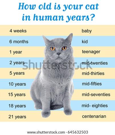 Pet Age Concept Comparison Chart Cat Stock Photo Edit Now