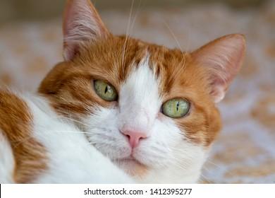 Pet animal; cute cat indoor
