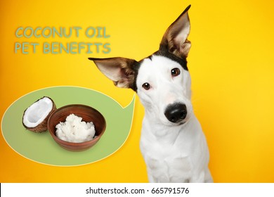 Pet care concept. Dog and bowl of coconut oil on color background