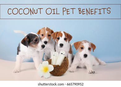 Pet care concept. Puppies and bottles of coconut oil with shell on color wall background