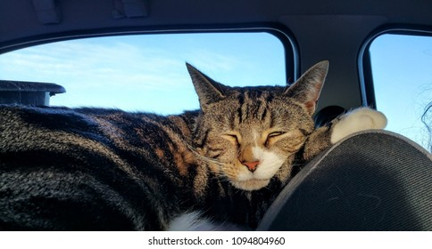 Pet cat sleeping in the car during a long trip