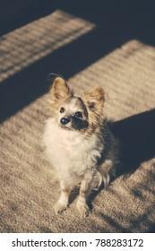 Pet Dog in Morning Light