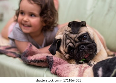 Pet dog pug with a girl
