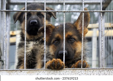 Pet dogs in cage, closeup of photo