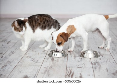 Pet eating foot. Cat and dog eats food from bowl
