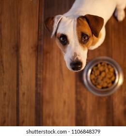 Pet eating foot. Dog eats food from bowl