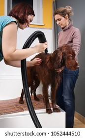 pet groomer drying fur of dog with hair dryer after washing at salon