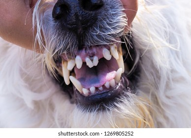 Pet Health Care Mouth and teeth of angry dog. Tooth decay and sick animals. Mad dog disease, dangerous symptoms.