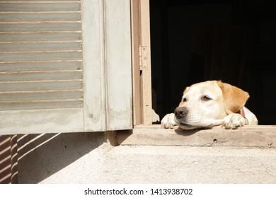 Pet looking at window, Dog