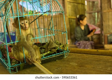 Pet monkey in a small blue cage - Thailand