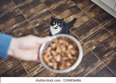Pet owner holding bowl with feeding for his hungry cat at home kitchen.