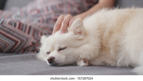 Pet owner massage on her white dog