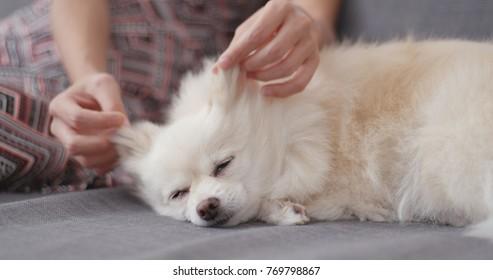 Pet owner massage on her dog
