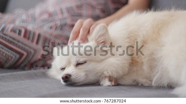 飼い主が白い犬にマッサージをする