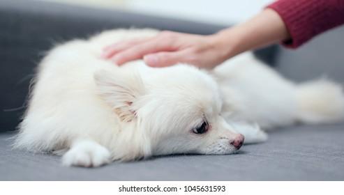 Pet owner massaging on her dog