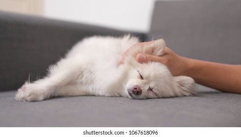 Pet owner massaging on her dog on sofa