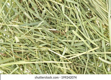 Pet Rabbit Feed Timothy Hay Background