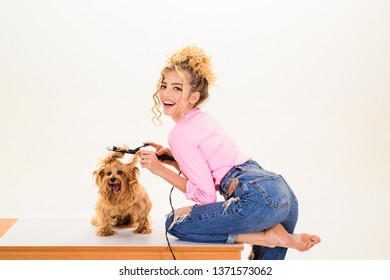 Pet salon. Petshop. Beauty salon for animals. Dog salon. Grooming. Grooming master making dog hairstyle. Pet grooming. Animal clinic. Vet.
