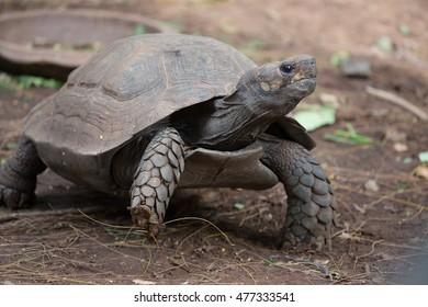 Pet turtle in a zoo