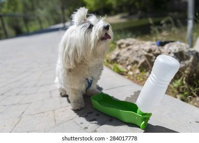 Pet water.