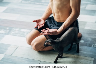pet yoga. training with your animals can be fun. fit healthy strong yogi trying to relax or meditate with his sphynx cat.