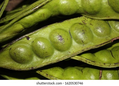 Petai or Indonesians used to call it pete is a food that many Indonesians shunned because of its pungent odor.