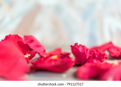 Petal of red rose flower nature beautiful flowers from the garden on wooden floor with copy space in Valentine's Day, Wedding or Romantic Love concept