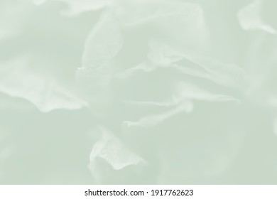 Petal of rose isolated on white for background