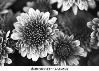 Lotus flower black and white images stock photos vectors petals of a beautiful flower on a black background in black and white mightylinksfo