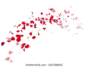 The petals of a dark red rose fly far into the distance. White isolated background. On a blurred background of rose petals