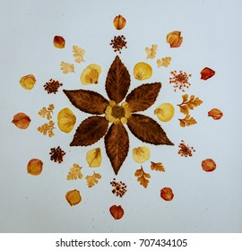 Petals & Flower leaves Mandala