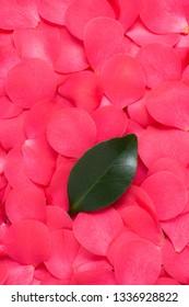 Petals of flowers