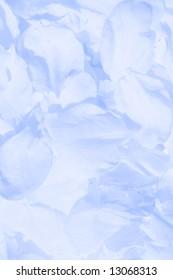 Petals of flowers (blue gamma, macro view)