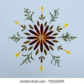 Petals Mandala