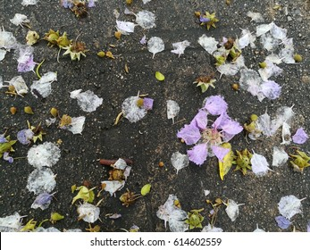 Petals on the concrete floor after the heavy rain.