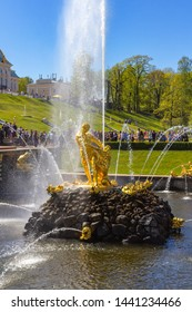 Peterhof, Russia, 05.18.2019. The gilded figure of Samson tearing the lion's mouth is the largest fountain of the Great cascade, the height of its jet reaches 21 meters