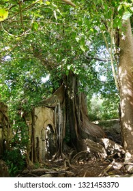 Petit Canal, Guadeloupe/France - 01/30/2019 : Ancient slave prison and banyan tree at Petit Canal in the French West Indies