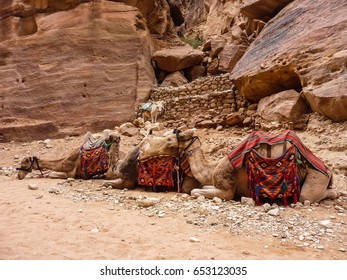 PETRA, JORDAN, NOVEMBER 25, 2011: on a foreground - three camels lying in a row on sand, in the background - pink stones with a curlicue and little, standing donkey