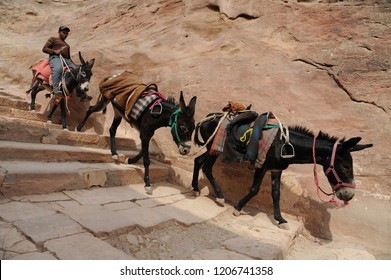 Petra, Jordan - September 30th, 2018: a young bedouin and his donkeys climbing stairs in the lost city of Petra, in Jordan